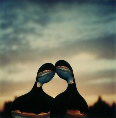 polaroid-1979.jpg