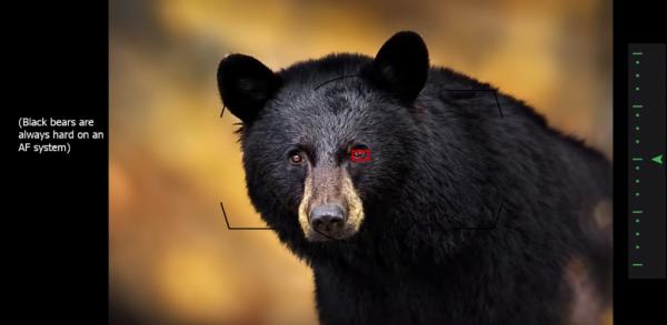 FireShot-Capture-497-Secrets-To-Stunning-Wildlife-Photogra_-http___www.backcountrygallery.com_-600x2931.png
