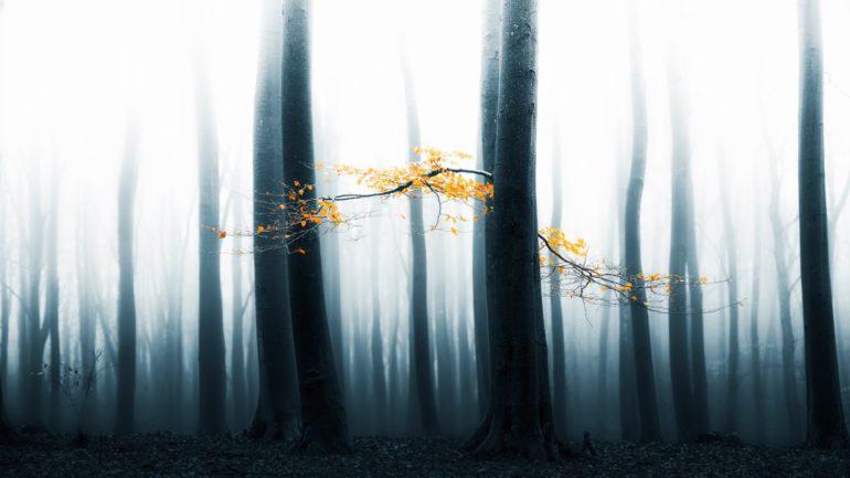2015-Landscape-Nature-1432821598663_Speulder+Revisited+II_large.jpg