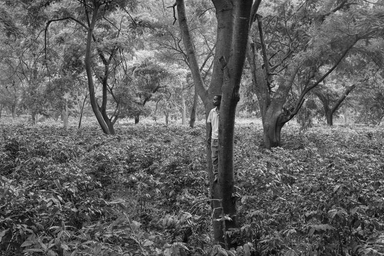Coffee+Fields+Tanzania+©+Jakob+de+Boer.jpg