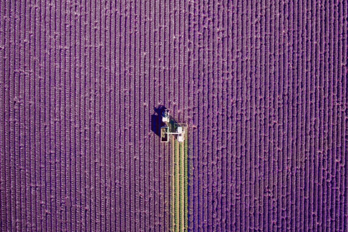Fields of Lavender in Valensole, Provence, France - © jcourtial