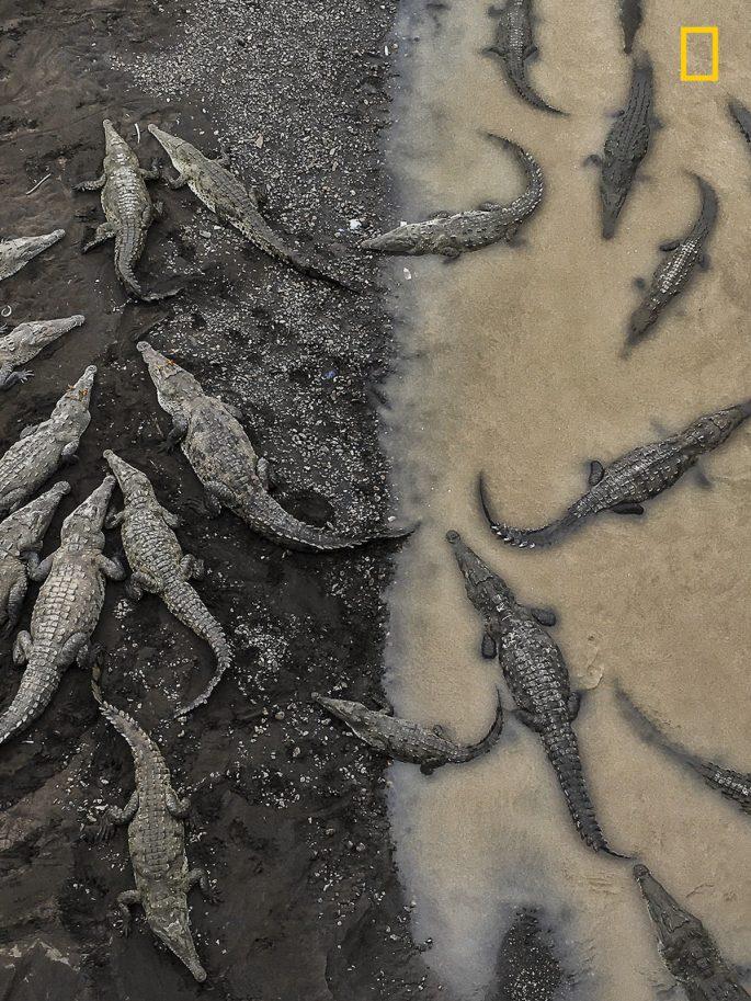 crocodiles-at-rio-tarcoles-tarun-sinha