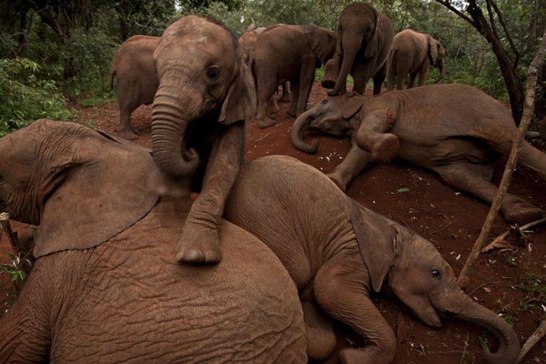 A Kenyan elephant orphanage