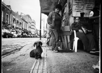 ©Clotilde_RICHALET_Dogs_Along_The_Road_2650