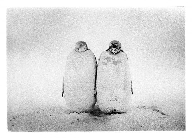 antarktyda 011-30A 001