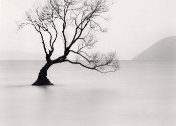 Wanaka Lake Tree, Study 1, Otago, New Zealand. 2013_preview