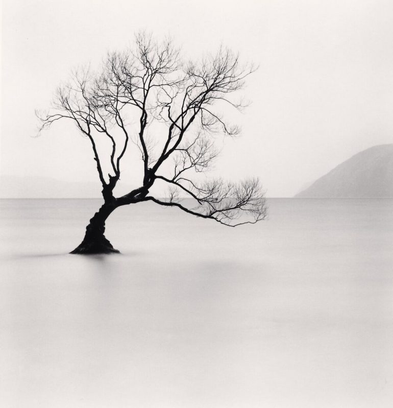 Wanaka Lake Tree, Study 1, Otago, New Zealand. 2013_preview