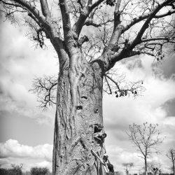 3_Baobabs_Citerne_Ampotaka_NB_2287