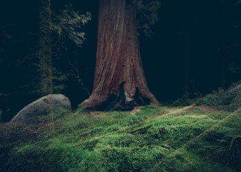 Treehugger © Marshmalow laser feast