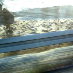 Sheeps On A Farm, Highway