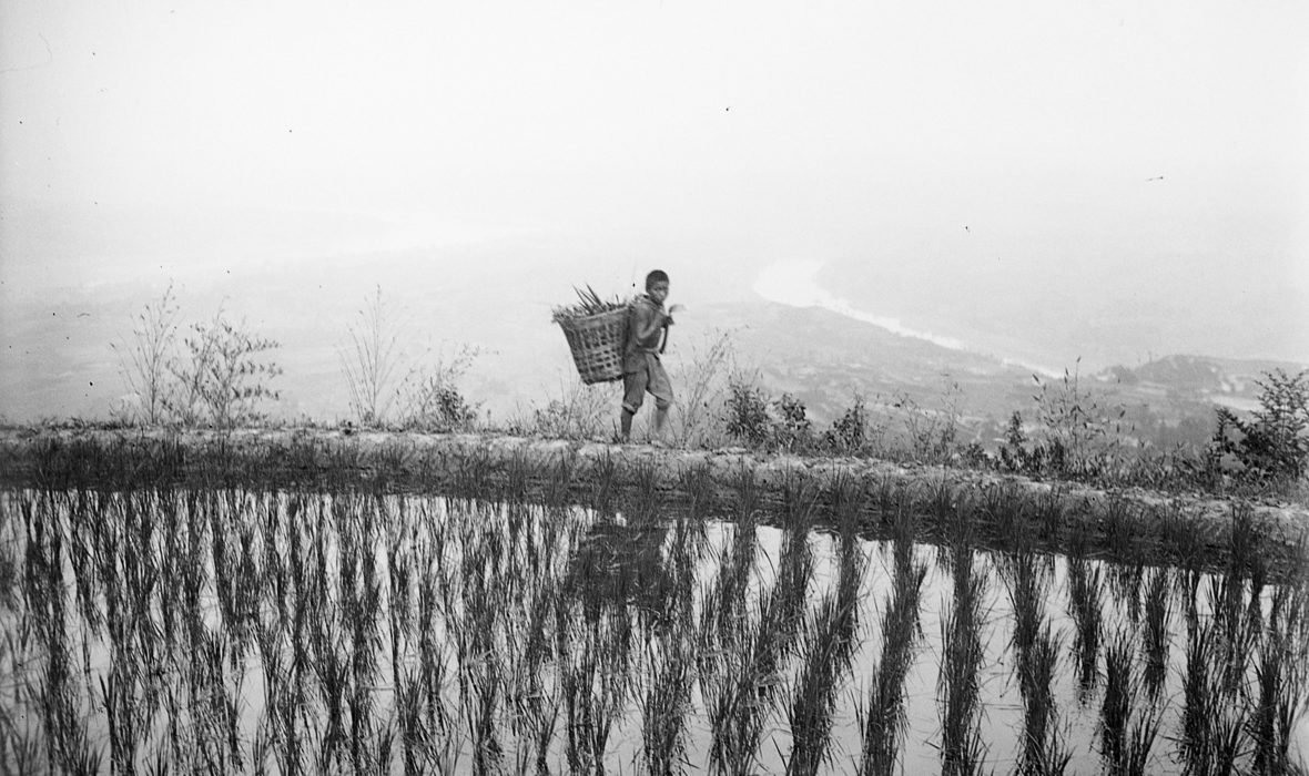 Sichuan. Hejiang, rizières au-dessus de la ville
