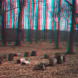 11.Stumps and forest_2017_stereograph