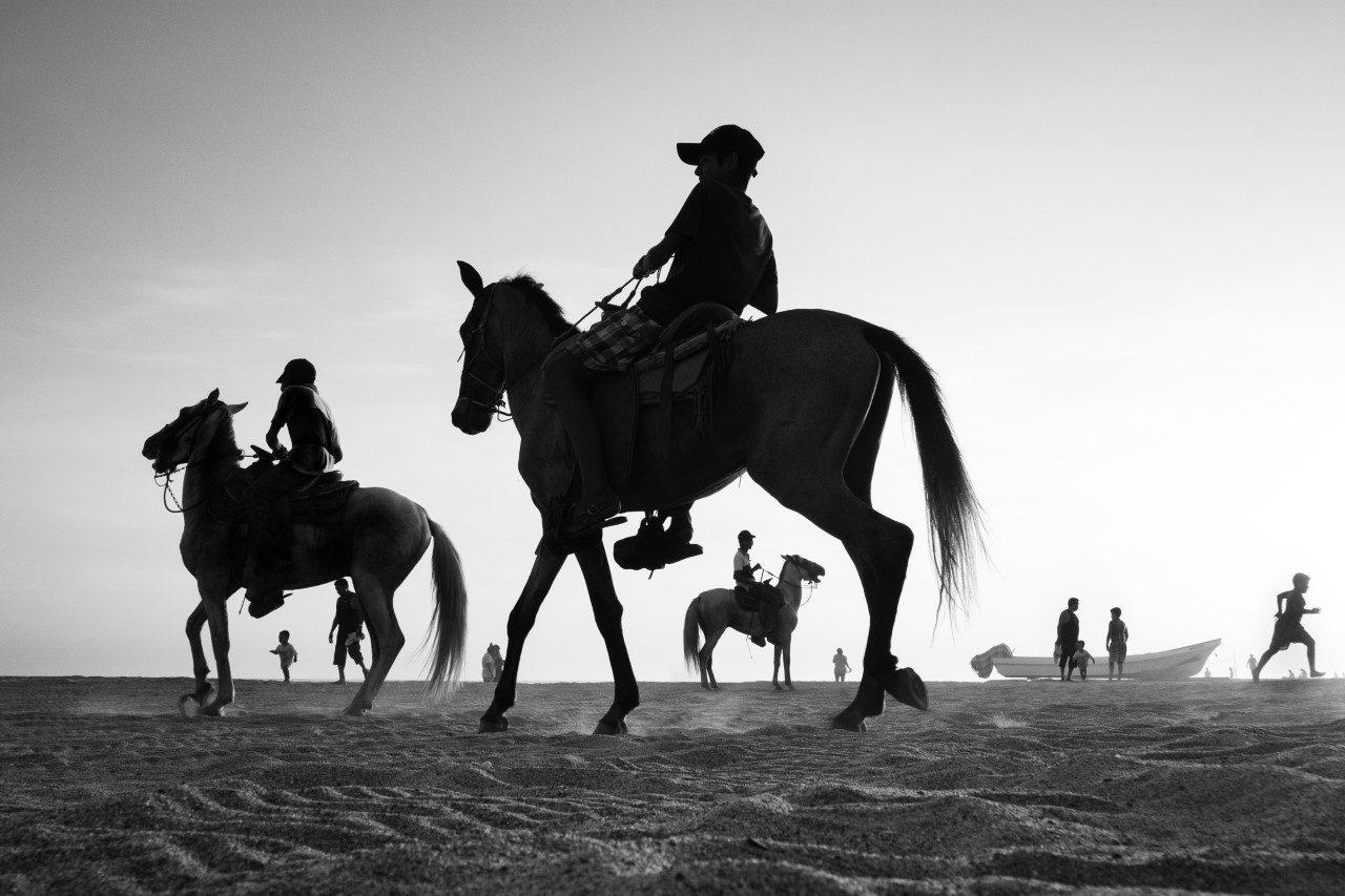 thumbnail_Horses-2