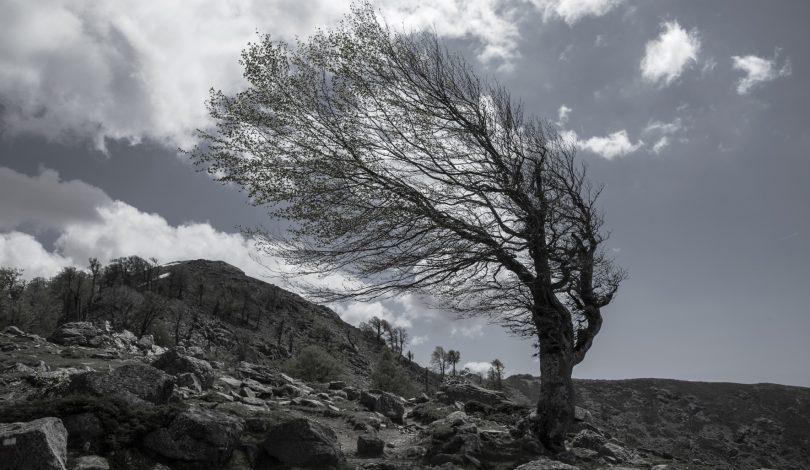 arbre dans le vent 2