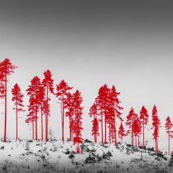 © KAHILANIEMO Jaakko - 100 Hectares of Understatement -3