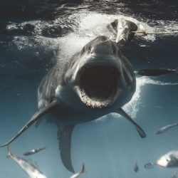 Euanart-Jaws-Shark-Photo-3