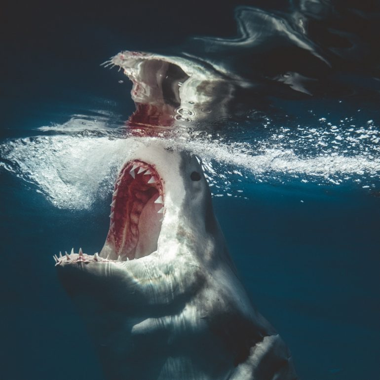 Euanart-Jaws-Shark-Photo-4