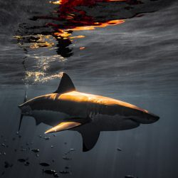 Euanart-Jaws-Shark-Photo-6