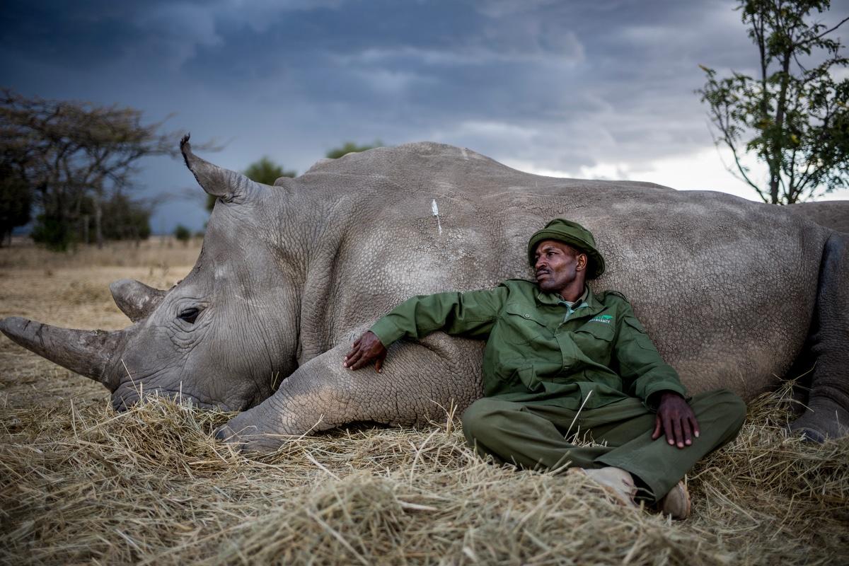 Justin Mott photographie les derniers rhinocéros blancs