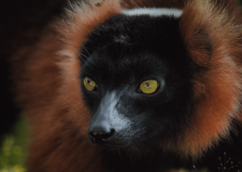 ben-simon-rehn-madagascar-wildlife-9