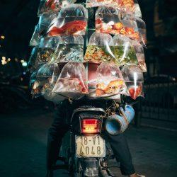 motorcycle-delivery-hanoi-photos-jon-enoch-1