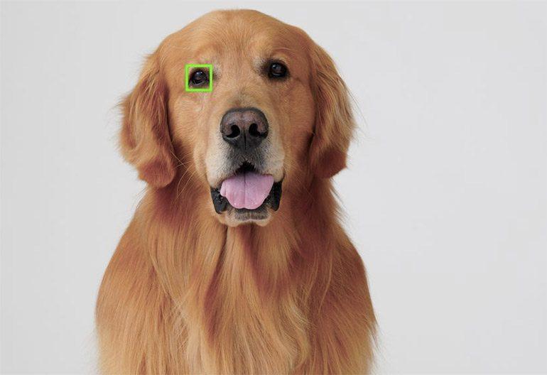 eye-af-animal-sony-1