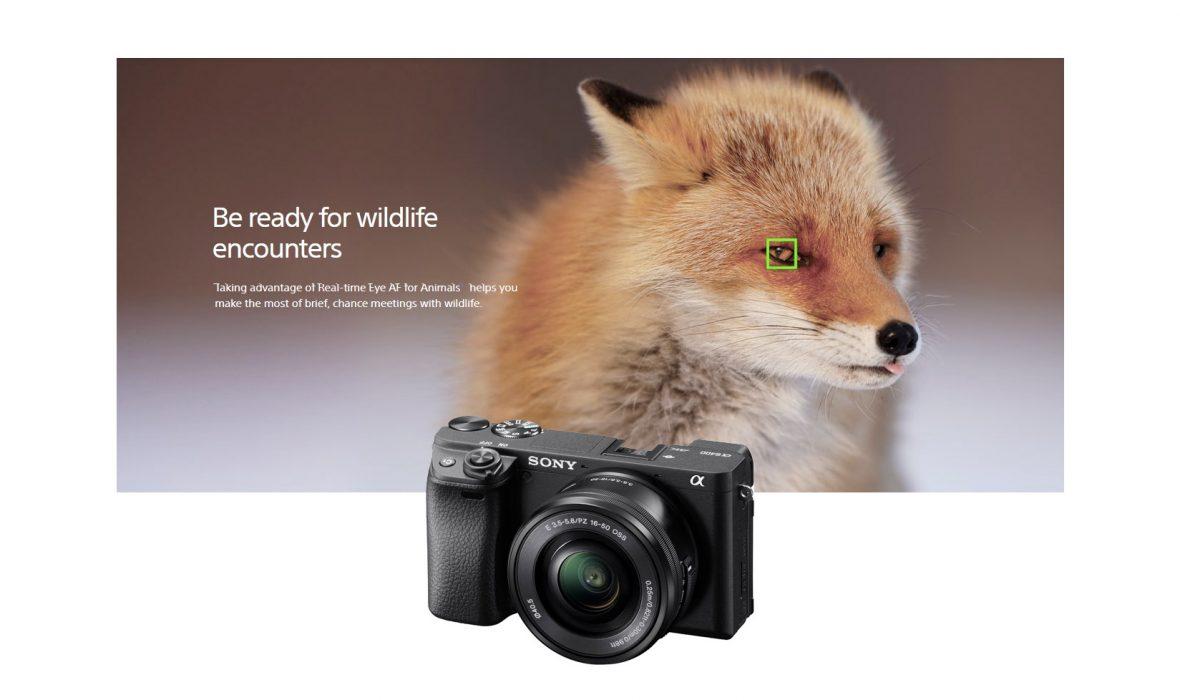 eye-af-animals-a-6400