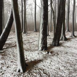 55-1st-TREES-Christian Helwig
