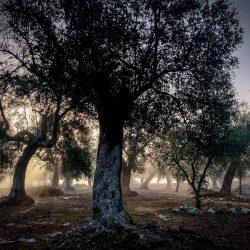 56-2nd-TREES-Neil Bennett