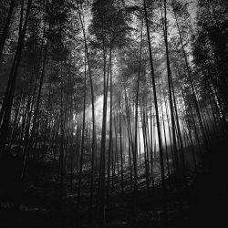 57-3rd-TREES-Zhang Xiaojun