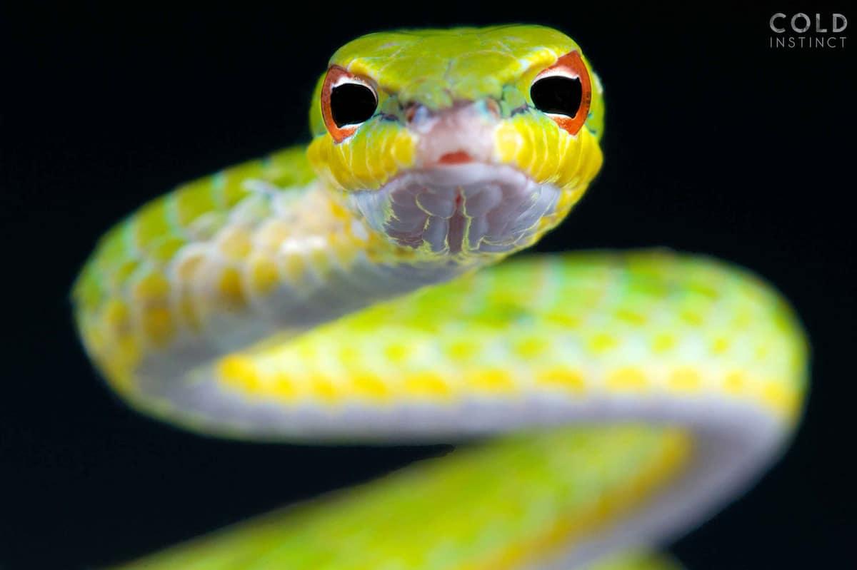 Les incroyables portraits de reptiles de Matthijs Kuijpers