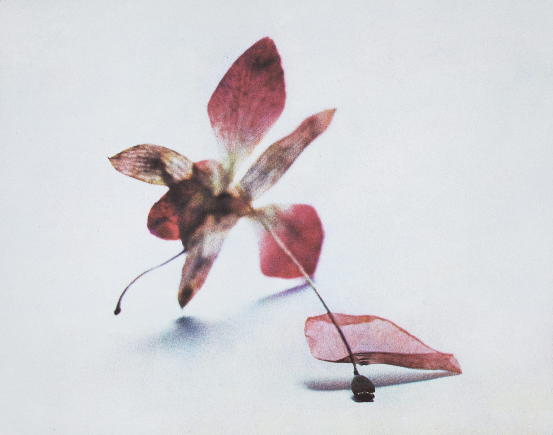 Rêve d'herbier : photographie et nature à la Galerie Parallax
