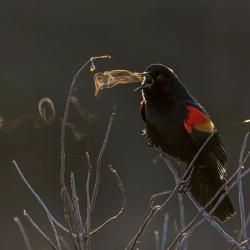 concours-photo-oiseaux-audubon-1