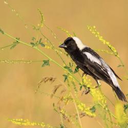 concours-photo-oiseaux-audubon-10