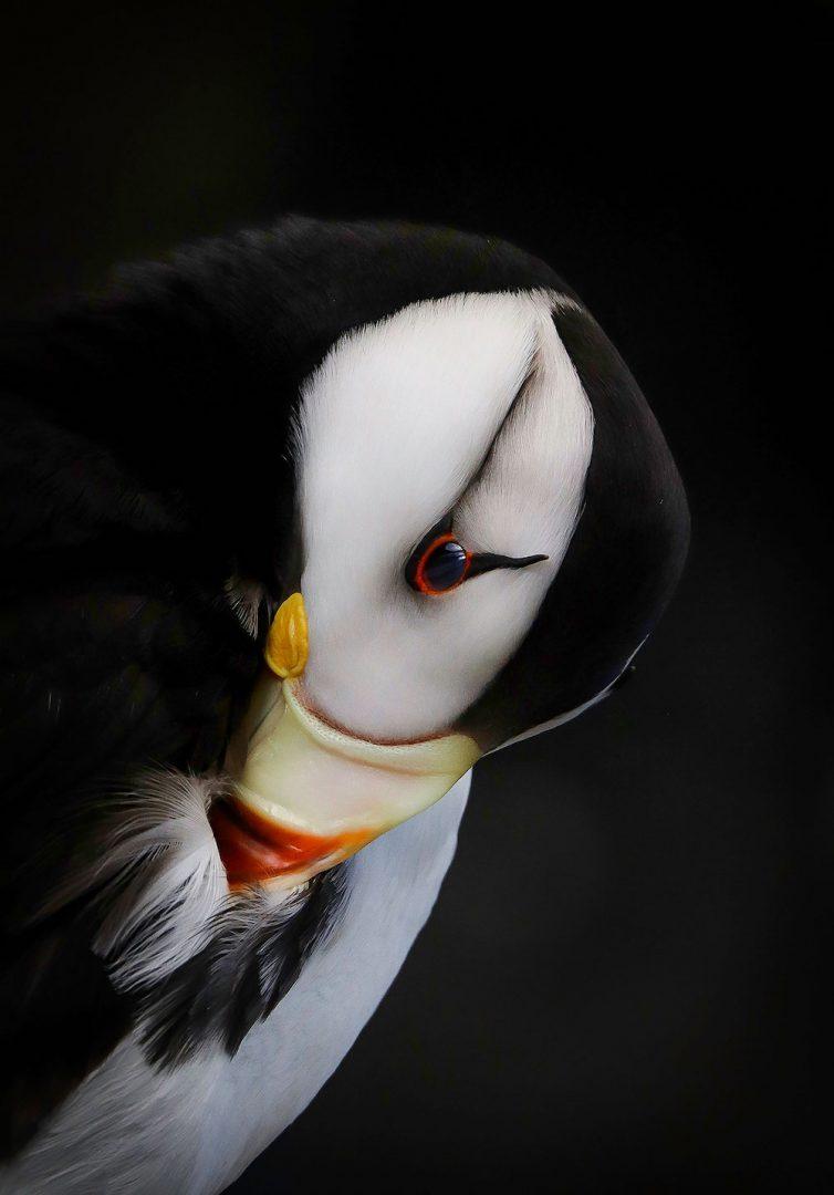 concours-photo-oiseaux-audubon-3
