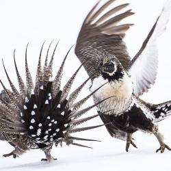 concours-photo-oiseaux-audubon-4