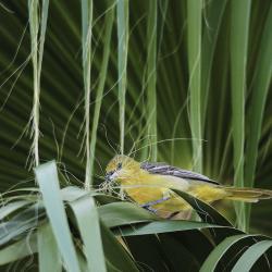 concours-photo-oiseaux-audubon-5