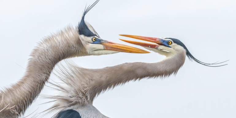 concours-photo-oiseaux-audubon-7-1-1200x600