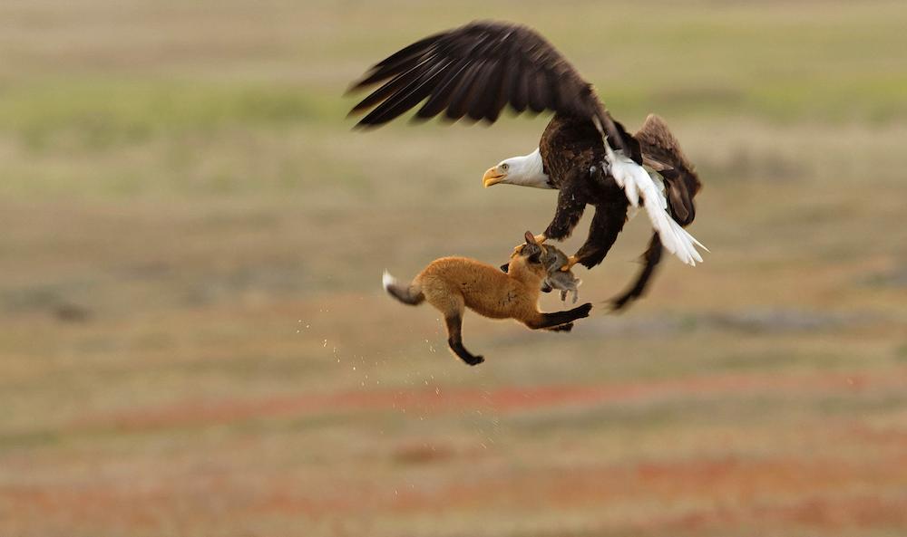 concours-photo-oiseaux-audubon-8