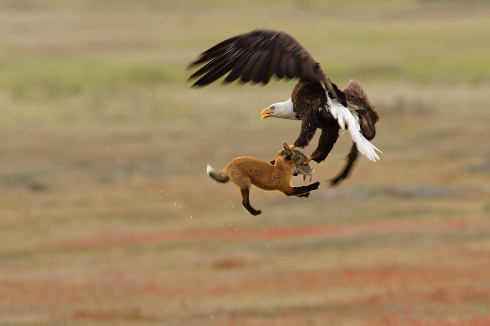 Les 10 lauréats du concours de la plus belle photographie d'oiseaux en 2019
