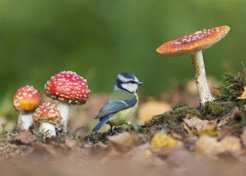 British-Wildlife-Photography-Awards-British-seasons-winner-by-Paul-Sawer-4