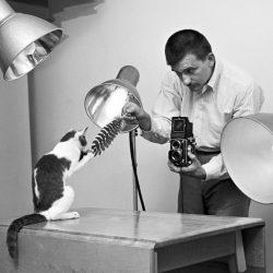 walter-chandoha-cats-photography-taschen-1