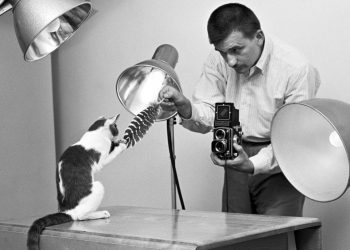 walter-chandoha-cats-photography-taschen-1