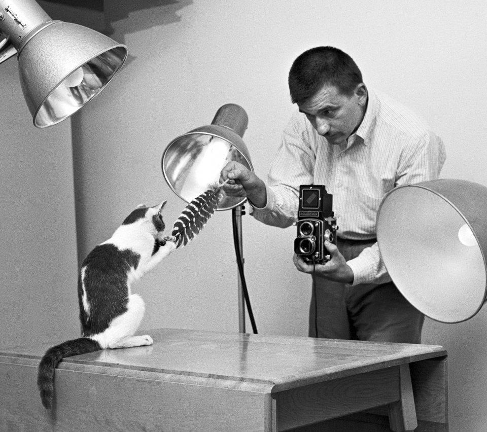 Les magnifiques photos de chats de Walter Chandoha