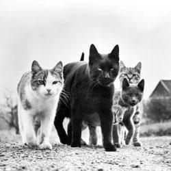 walter-chandoha-cats-photography-taschen-2