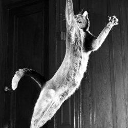 walter-chandoha-cats-photography-taschen-4