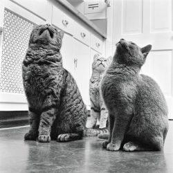 walter-chandoha-cats-photography-taschen-5