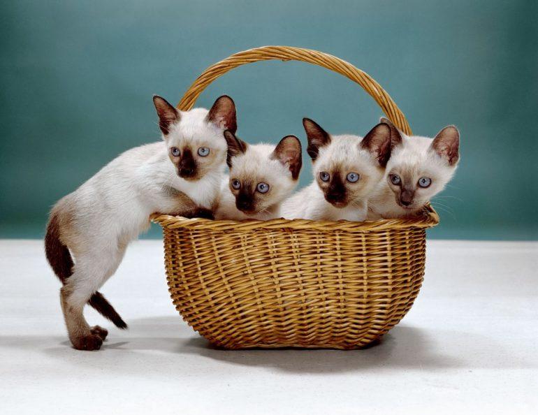 walter-chandoha-cats-photography-taschen-6