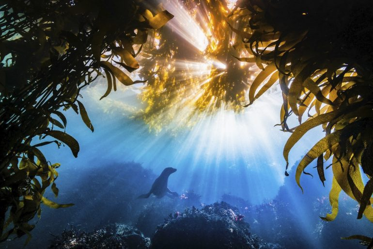 The-Nature-Conservancy-Photo-Contest-Grand-Prize-Tyler-Schiffman