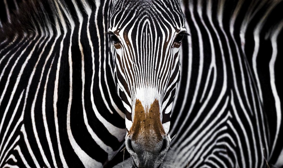 The-Nature-Conservancy-Photo-Contest-Wildlife-3rd